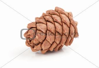 Great fir cone. Isolated on white background