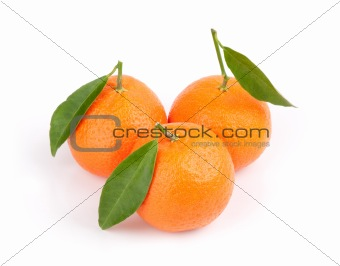 Three ripe tangerines with leafs