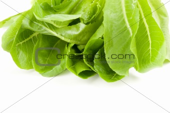 Green salads leaves