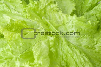 Background image of lettuce