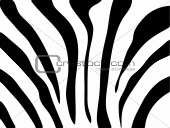 Vector zebra texture Black and White