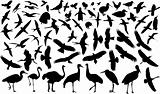 birds silhouette
