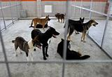 Homeless dogs shelter