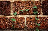 Leaf on laterite on brick