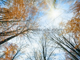 Autumn sky with sunshine and tree tops