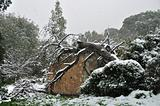 fallen tree in snow storm