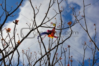 kite tangled on tree branches