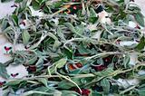 organic sage plant leaves