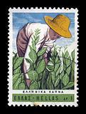 tobacco harvest vintage postage stamp