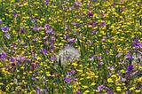 field of wild flowers in the spring
