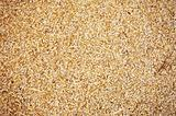 Natural Wheat Grains