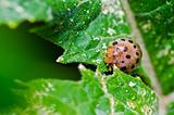 orange beetle on green leaf