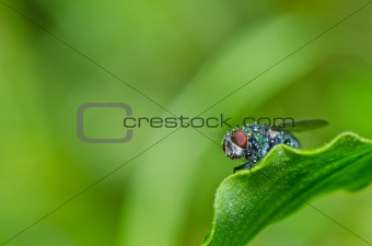 green fly in green nature