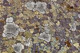 Granite rocks covered with lichen