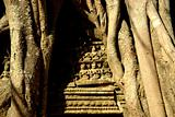 Tree roots around a temple in Angkor