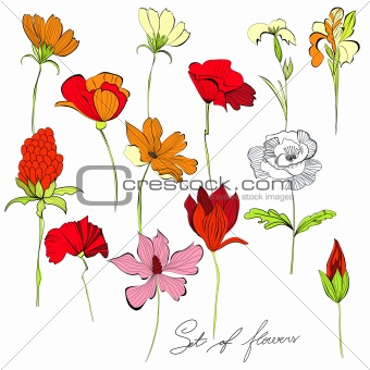 Set of flowers