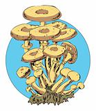 Honey agaric