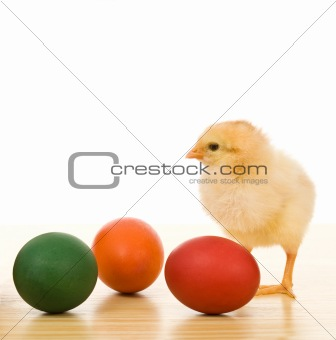 Little chicken with dyed easter eggs