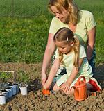 Planting seedlings in spring time