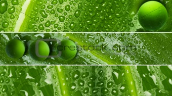 Waterdrops on leaf texture - banners