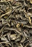 dry green tea leaves