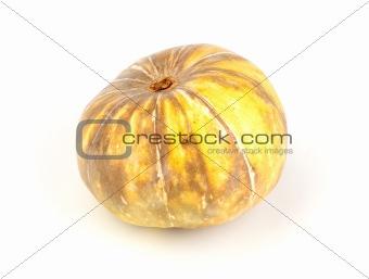 Single fresh pumpkin