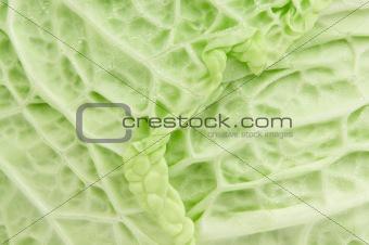 savoy cabbage texture