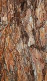 background spruce bark