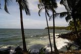 Palms on the beach in Guiana