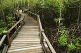 Wood Boardwalks mangrove forest
