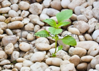 Small plant grow up on  gravel