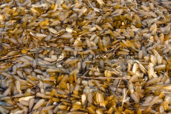 Group of insect termite
