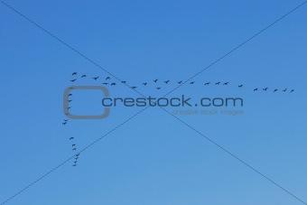 Waterbirds in the sky