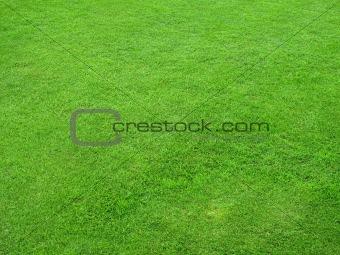 Beautiful green lawns