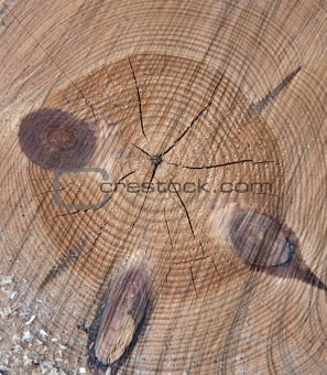 Cross ection of tree