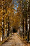 Avenue in autumn