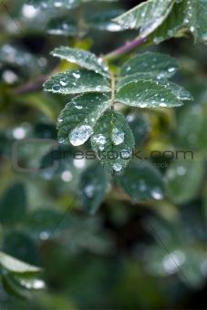 Close up of rain drops