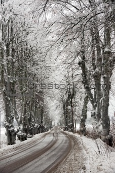 Avenue in snow