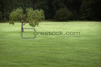 Apple tree in field