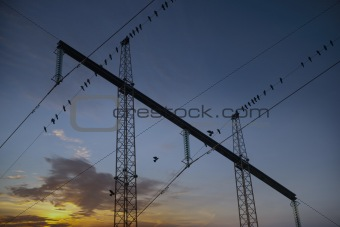 Migrating birds in electricty pylon
