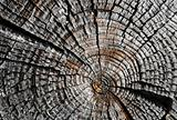 Old Dry Log Profile