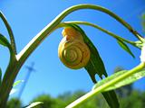 snail and plant