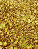 green and brown carpet of autumn leaves