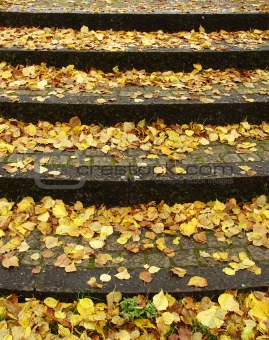 carpet of brown,yellow and orange  leaves in autumn  on steps