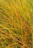 long green grass in autumn,coloring yellow,orange and red