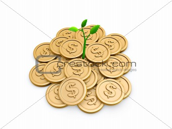 Gold coins and seedling
