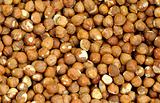 Closeup Shelled Hazelnuts