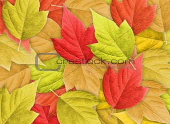 Abstract Background with Group of Autumn Leafs