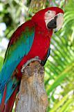 Parrot posing