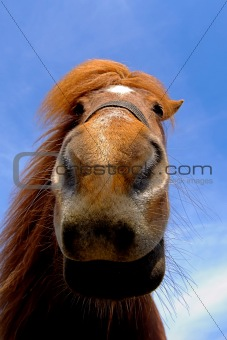 Face of a curious horse